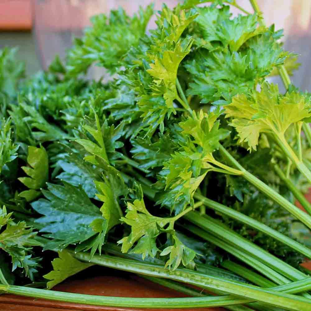Par-Cel Leaf Celery stems and leaves - (Apium graveolens v. secalinum)