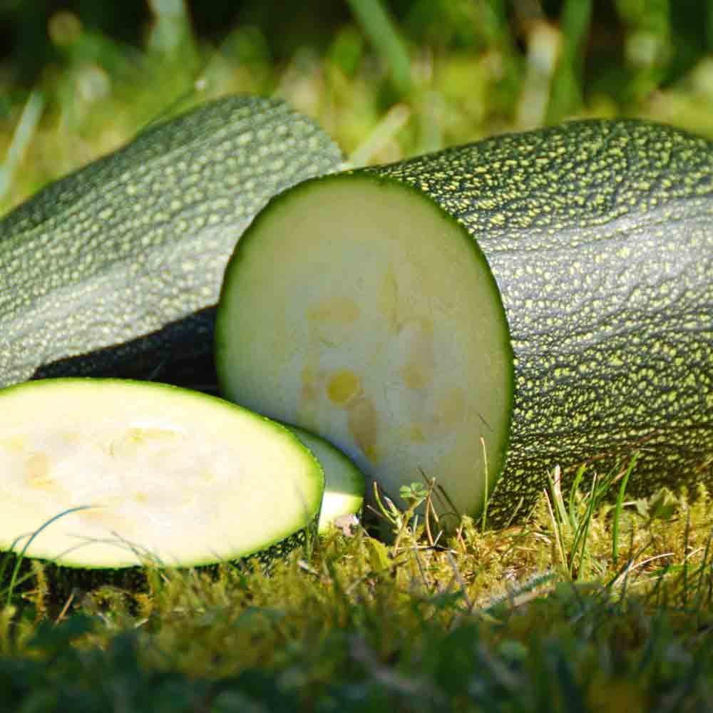 Sliced Black Beauty Heirloom Zucchini - (Cucurbita pepo)