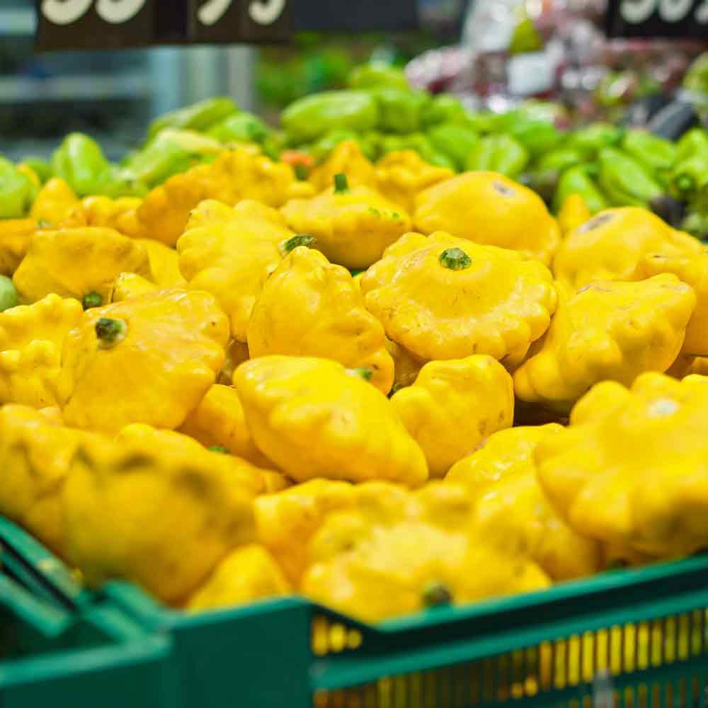 Yellow Bush Scallop Summer Squash - (Cucurbita pepo)