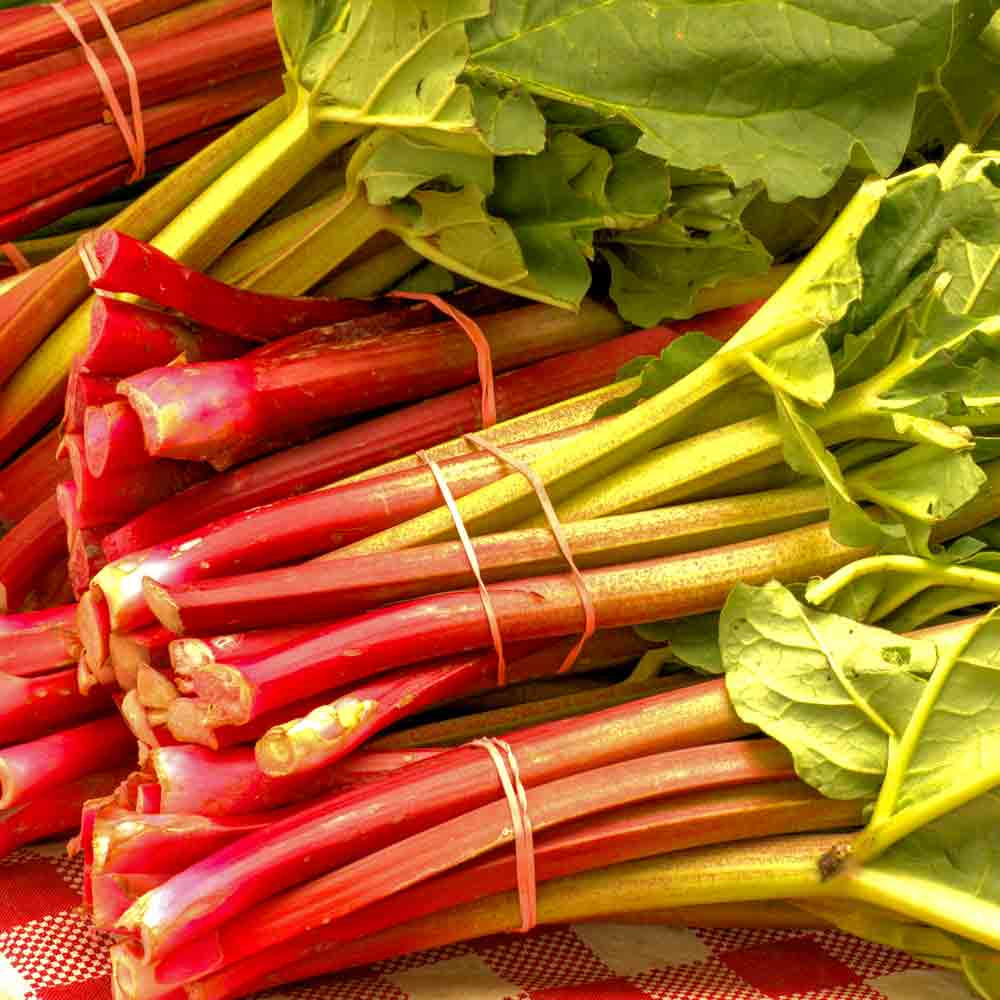 Victoria Rhubarb Stalks - (Rheum rhabarbarum)