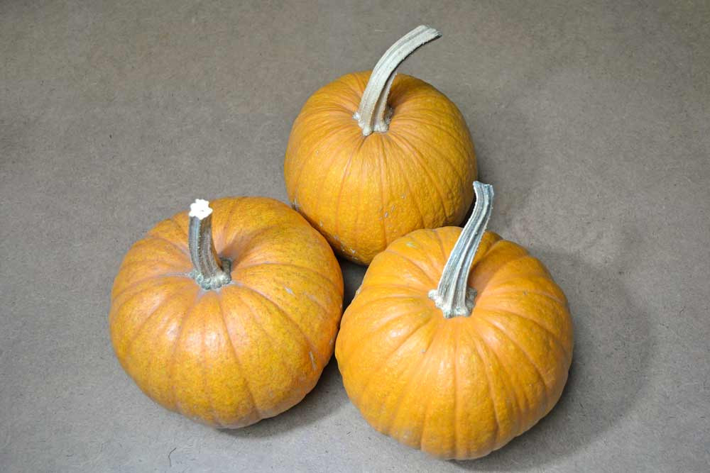 New England Sugar Pie Pumpkins - (Cucurbita pepo)
