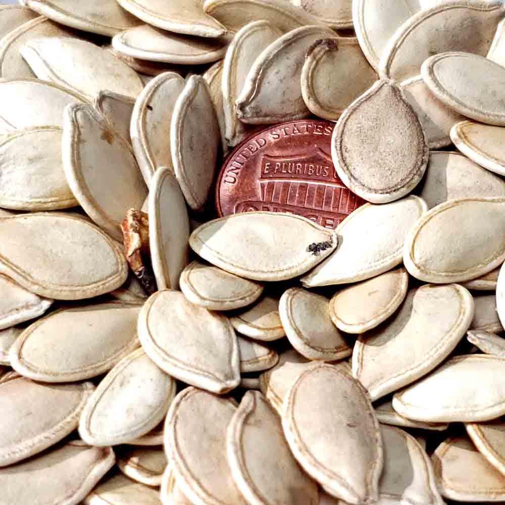 New England Sugar Pie Heirloom Pumpkin Seeds - (Cucurbita pepo)