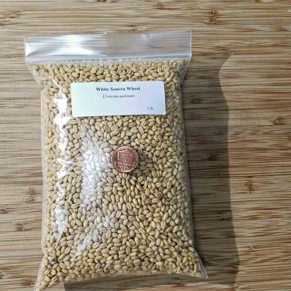 1 Lb Bag White Sonora Wheat Seeds - (Triticum aestivum)