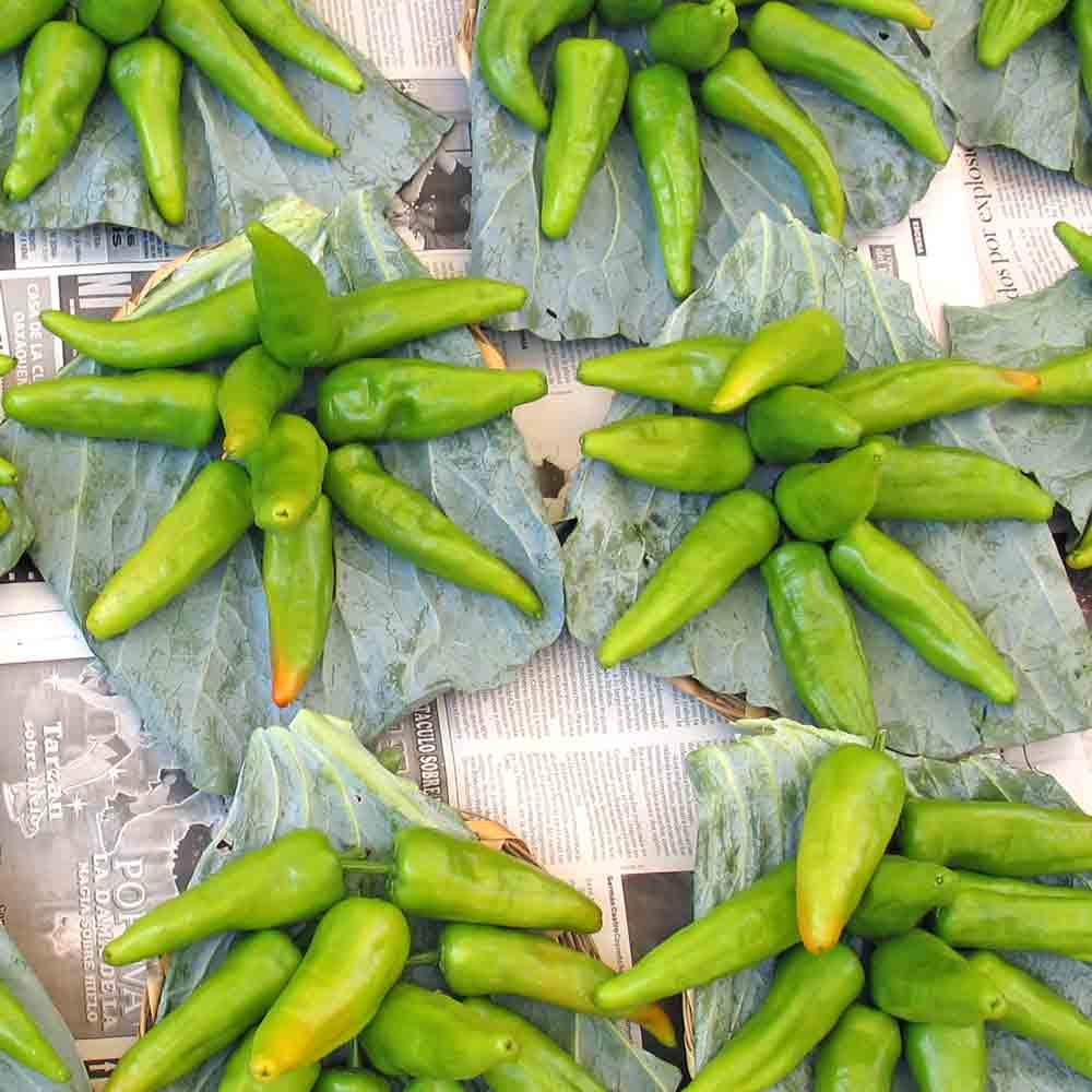 Chile de Agua Peppers displayed at Oaxaca market - (Capsicum annuum)