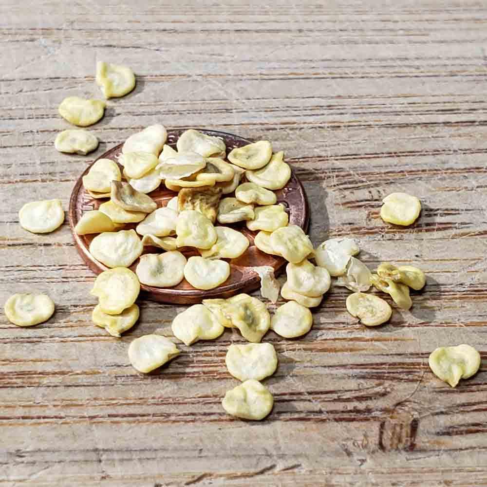 Chile de Agua Heirloom Pepper Seeds - (Capsicum annuum)