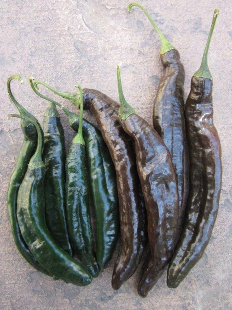 Pasilla Bajio/ Chile Negro/ Chilaca Pepper - (Capsicum annuum)