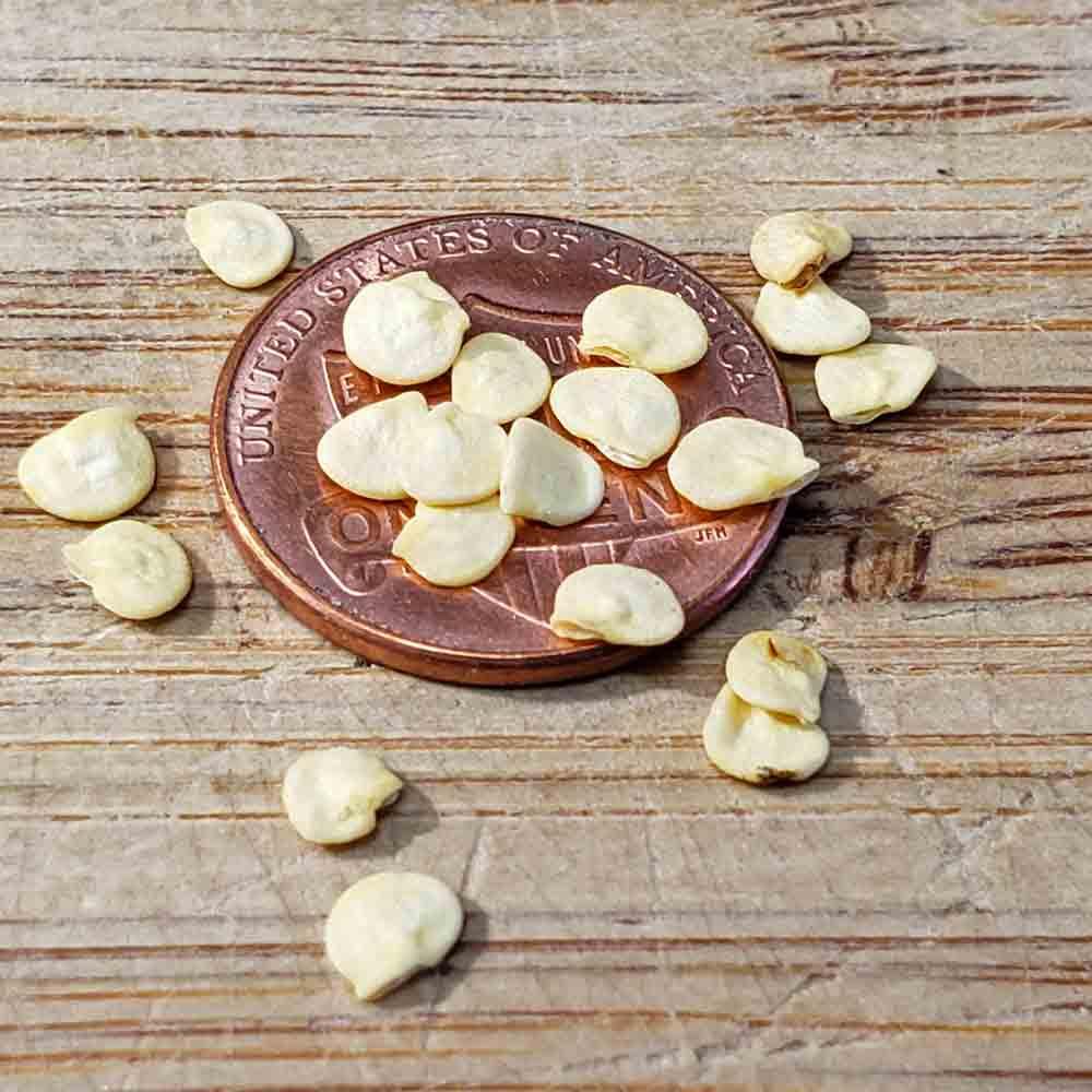 Pimiento de Padron Heirloom Pepper Seeds - (Capsicum annuum)