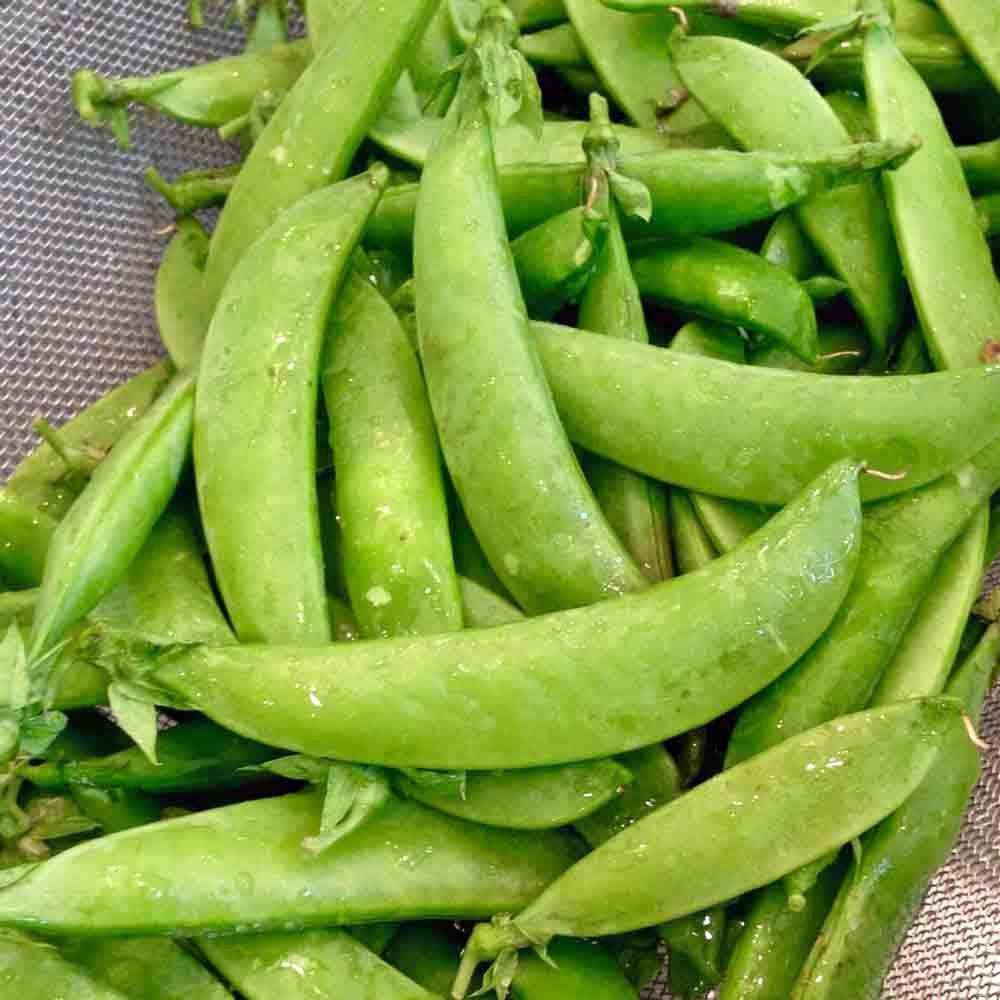 Fresh Picked Oregon Giant Sugar Pod Snow Peas - (Pisum sativum)