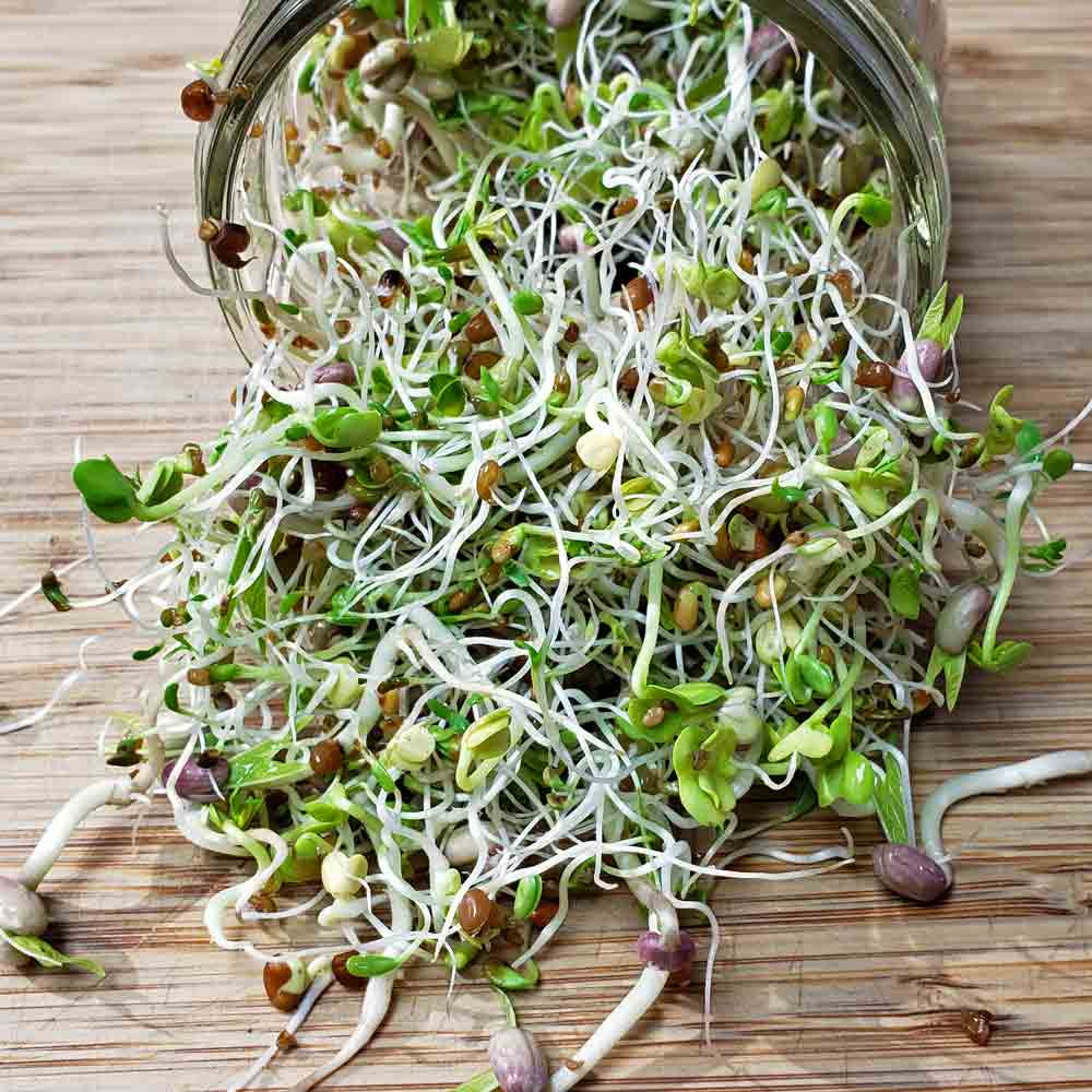 Sandwich Mix Sprouting Seeds - Sprouting 101 Collection