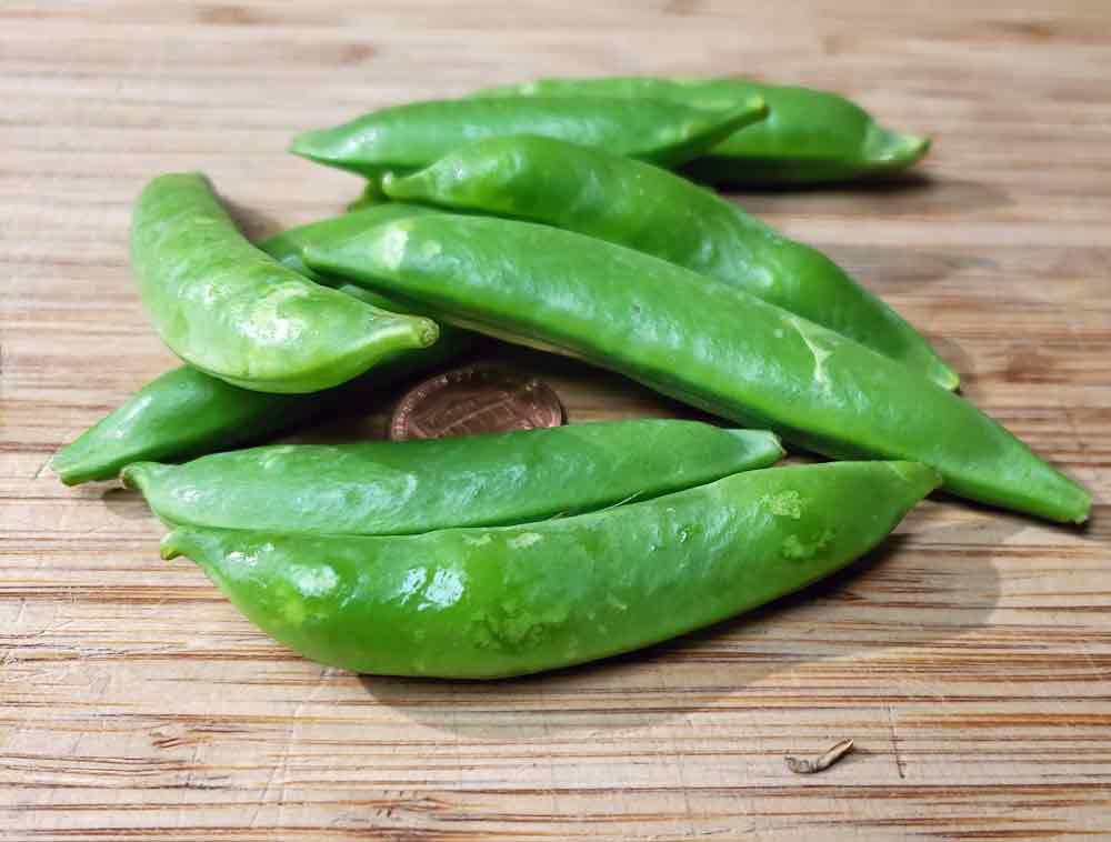 Dwarf Sugar Peas - (Pisum sativum)