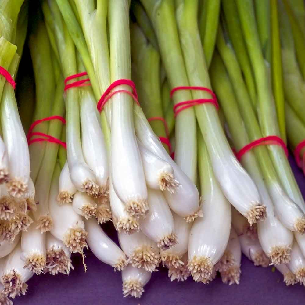 Evergreen Bunching Onions at market - (Allium fistulosum)