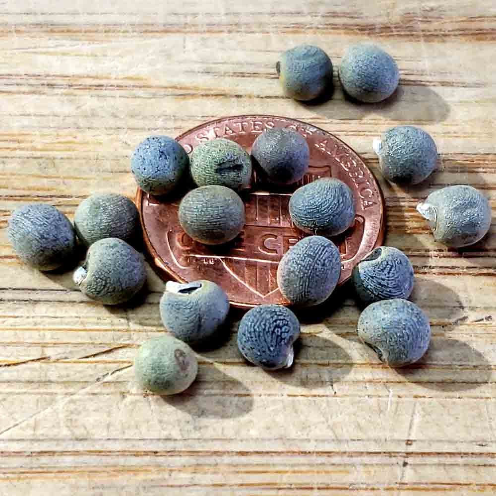 Clemson Spineless 80 Heirloom Okra Seeds - (Abelmoschus esculentus)