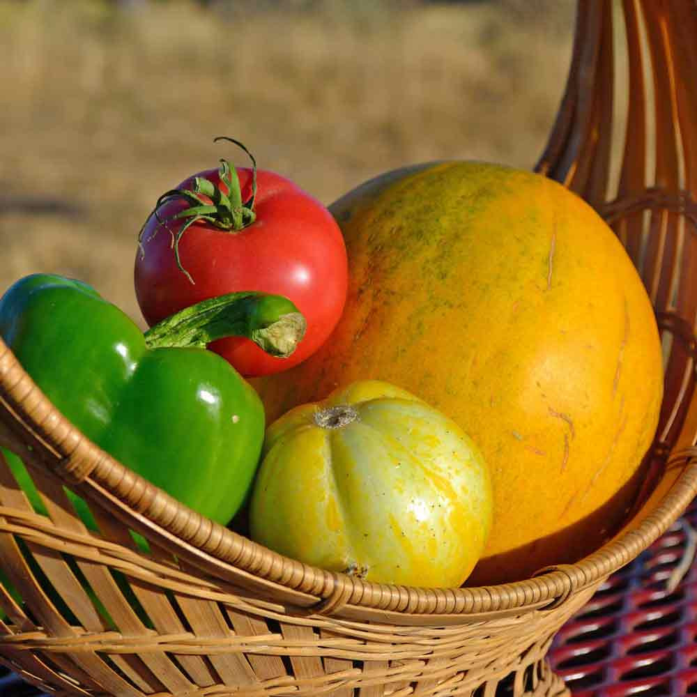 Collective Farm Woman Melon - (Cucumis melo var. inodorus)