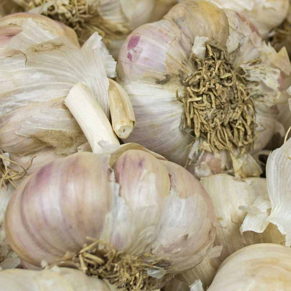 Organic Amish Heirloom Garlic Heads - (Allium sativum)