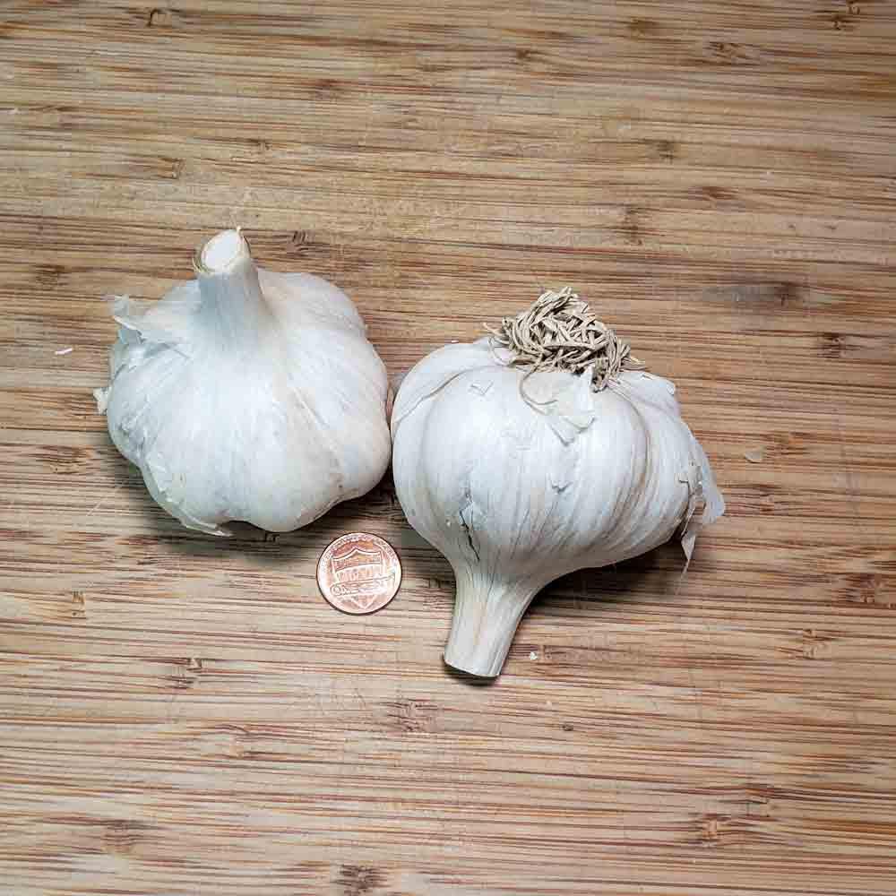 Organic Amish Garlic Bulbs  - (Allium sativum)