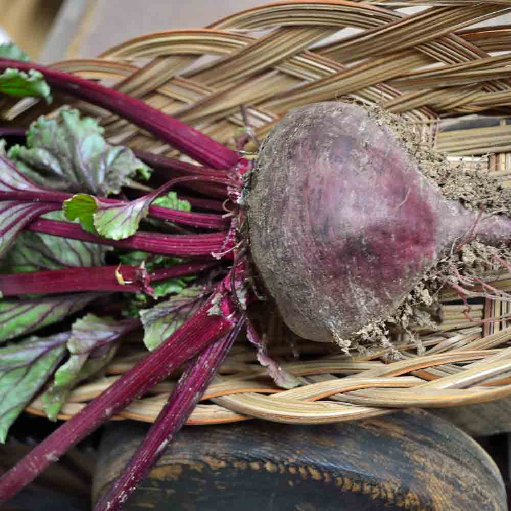 Cool Season Roots Collection - Bull's Blood Beet