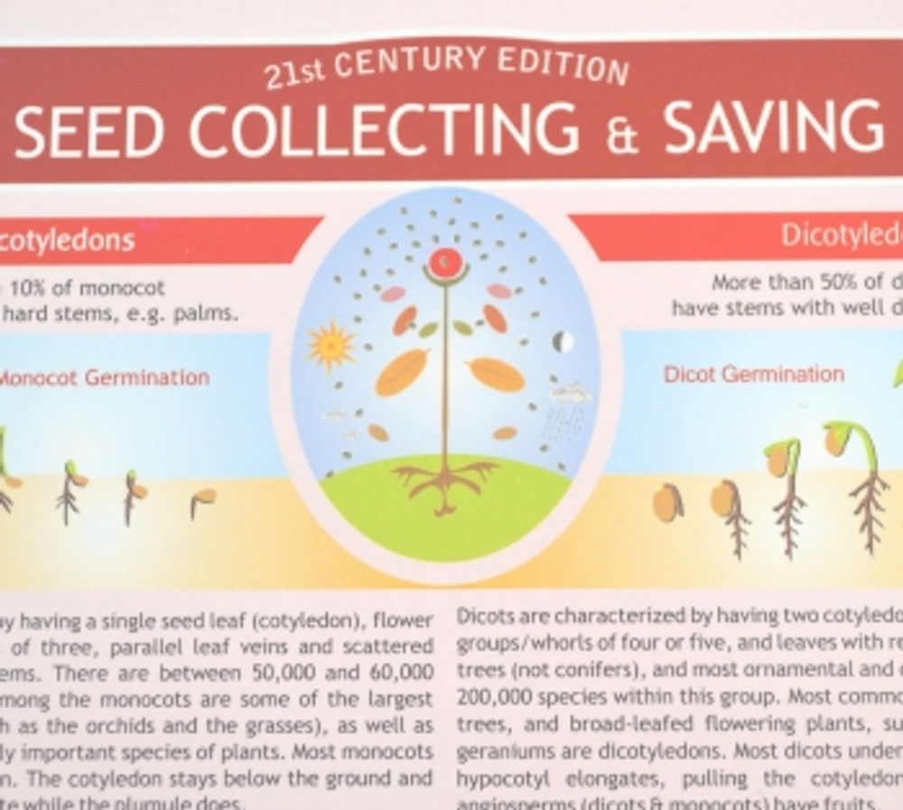 Seed Collecting & Saving Chart