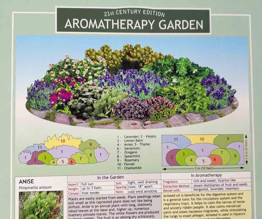 Aromatherapy Garden Chart