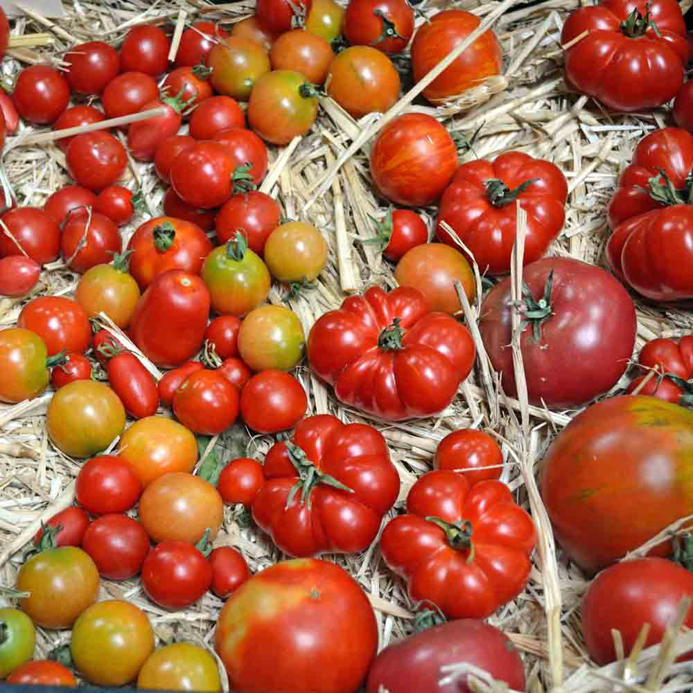 Tomato Lover's Collection