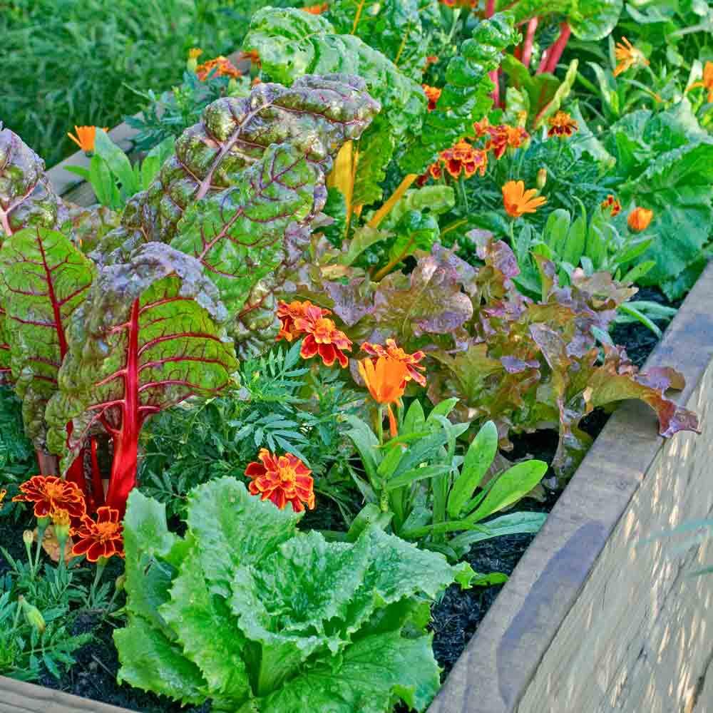 Urban Garden Heirloom Seed Collection