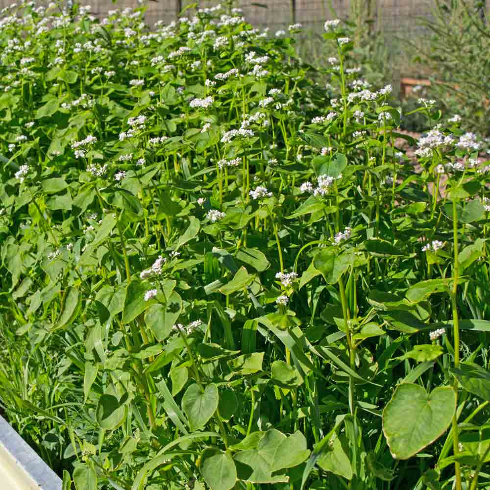 Garden Cover Up Mix (Cover Crop)