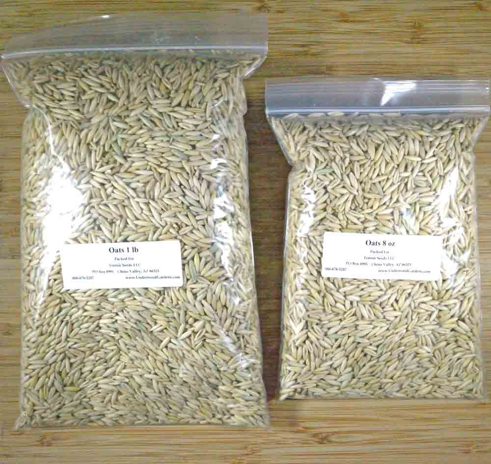 Cereal Oats Cover Crop Seeds - (Avena sativa)