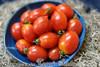 King Umberto Tomatos - (Lycopersicon lycopersicum)