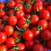 Freshly Picked Principe Borghese Tomatoes - (Lycopersicon lycopersicum)
