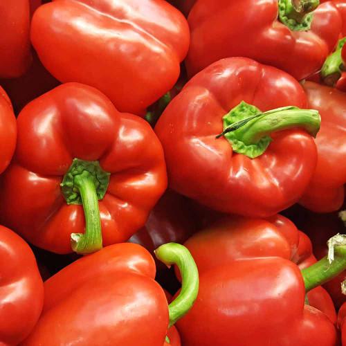 California Wonder Red Sweet Pepper Seeds - (Capsicum annuum)