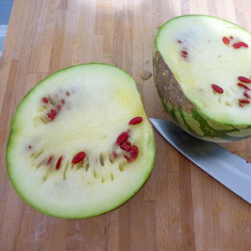 Red Seeded Citron Melon sliced open - (Citrullus lanatus var. citroides)