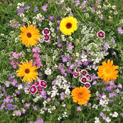 Fragrant Flower Seed Mix