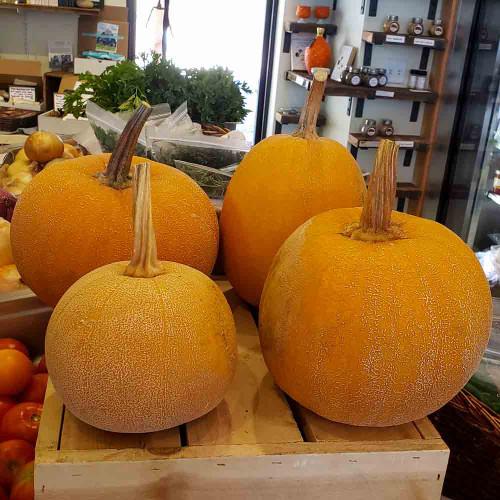 Winter Luxury Pumpkins at Market - (Cucurbita pepo)