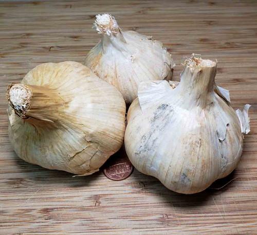 Heirloom Purple Glazer Hardneck Garlic Bulbs - (Allium sativum)