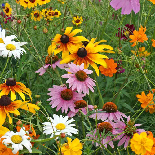 Terroir Seeds Cut Flower Seed Mix