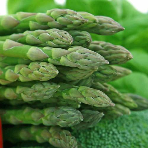 UC 72 Asparagus - (Asparagus officinalis)
