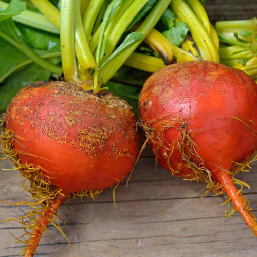 Golden Detroit Beet - (Beta vulgaris)