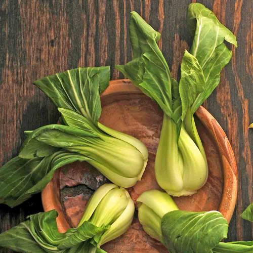 Pak Choi Chinese Cabbages  - (Brassica rapa v. chinensis)