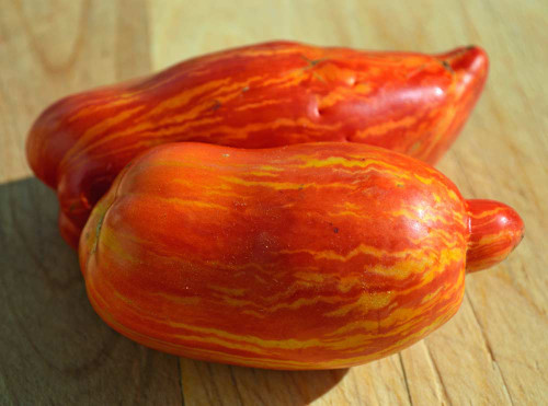 Speckled Roman Tomato  - (Lycopersicon lycopersicum)
