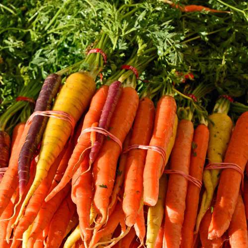 Kaleidoscope Baby Carrots - (Daucus carota var. sativus)