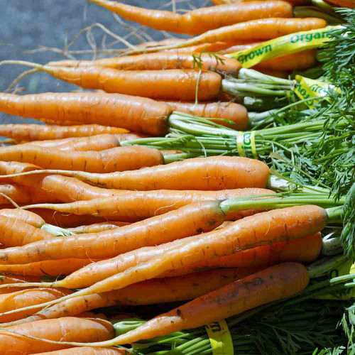 Little Finger Carrots - (Daucus carota var. sativus)