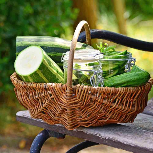 Sliced Cocozelle Zucchini with basket - (Cucurbita pepo)