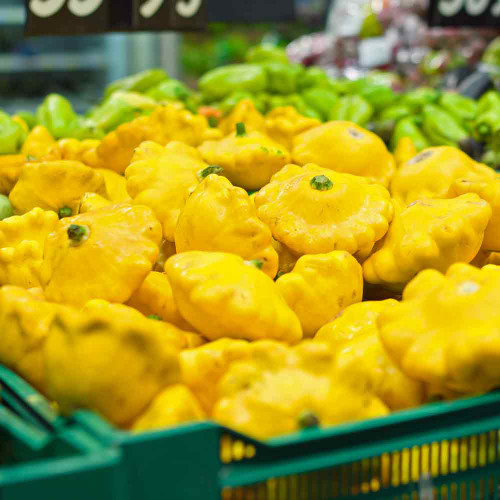 Yellow Bush Scallop Summer Squash - (Cucurbita pepo)