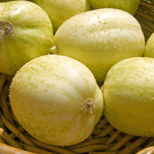 Crystal Apple Cucumber - (Cucumis sativus)