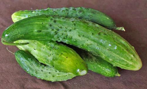 Parisian Pickle Cucumber - (Cucumis sativus)