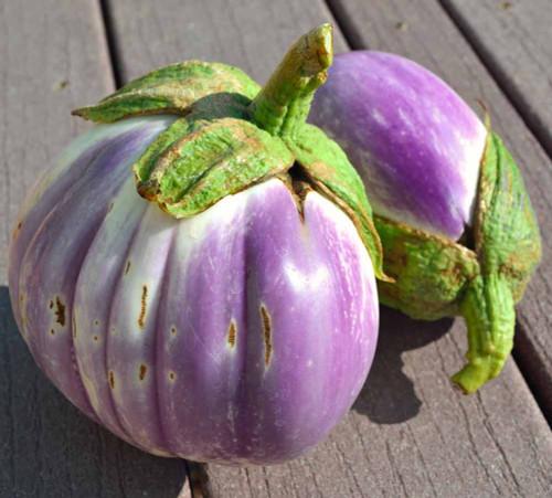 Rosa Bianca Eggplant fruits - (Solanum melongena var. esculentum)