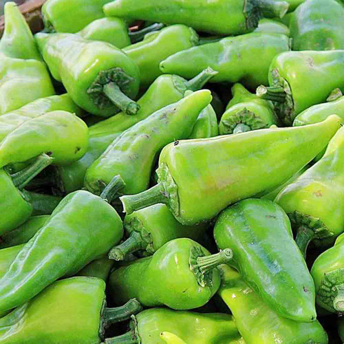 Chile de Agua Peppers at market - (Capsicum annuum)