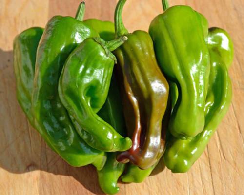 Ripe Pepperoncini Peppers - (Capsicum annuum)