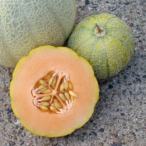 Sliced Minnesota Midget Melon next to canteloupe - (Cucumis melo var. reticulatus)