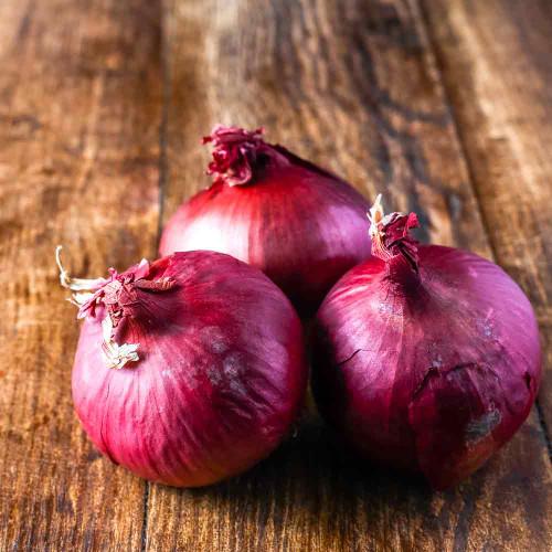 Red Wethersfield Onions - (Allium cepa)