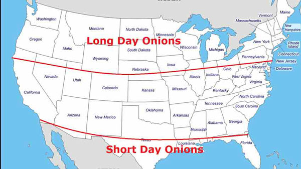 Long and Short Day Onion Region